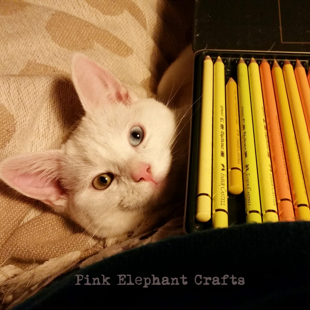 cute kitten with coloured pencils